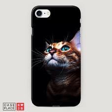 Диз. Мечтательный кот