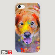 Диз. Собака в красках